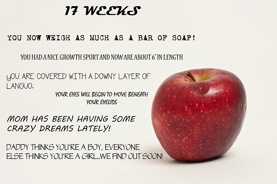 week 17 baby size - Siteze